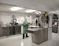 Cirujano veterinario en su práctica Imágenes de archivo libres de regalías