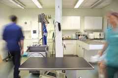 Cirurgião veterinário e enfermeira masculinos foto de stock