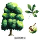 cisawy drzewo ilustracja wektor