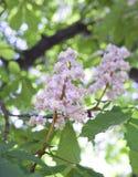 Cisawy kwiat mała głębia ciętość obrazy royalty free