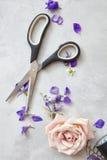 Ciseaux représentés sur le fond gris Photo libre de droits