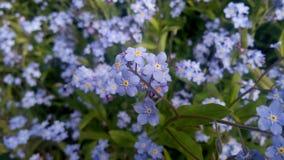 Cismigiu Garden in spring season. Stock Images