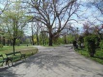Cismigiu Garden in spring season. Stock Photography