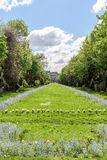 The Cismigiu Gardens (Parcul Cismigiu) In Bucharest Royalty Free Stock Image