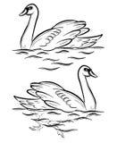 Cisne. stock de ilustración