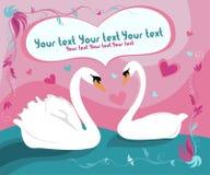 Cisne ilustração stock