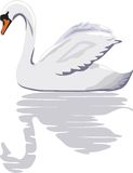 Cisne Libre Illustration
