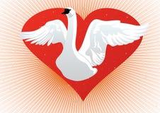 Cisne blanco en el fondo del corazón Foto de archivo
