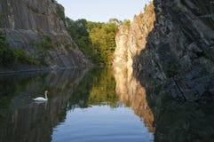 Cisne blanco en el lago rocoso Fotos de archivo