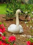 Cisne blanco que presenta para un retrato Fotografía de archivo libre de regalías