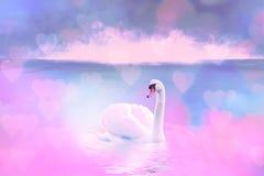 Cisne branca no lago nevoento no alvorecer Luzes da manhã fundo romântico Cisne bonita cygnus Romance da cisne branca com imagens de stock royalty free