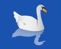 Cisne con la reflexión Fotos de archivo