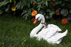 Cisne da matriz com cygnets foto de stock royalty free