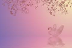 Cisne da natação Fotografia de Stock Royalty Free
