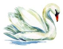 Cisne de la acuarela libre illustration