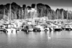 Cisne de la natación en la parte de atrás del contexto del bokeh del club náutico de Oslo Imagen de archivo libre de regalías