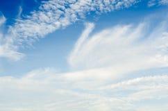Cisne del blanco del cielo nublado Imagen de archivo libre de regalías