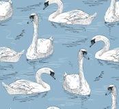 Cisne del bosquejo ilustración del vector