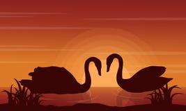 Cisne del paisaje de la belleza en siluetas del lago Imagenes de archivo