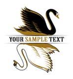 Cisne doble Fotografía de archivo libre de regalías
