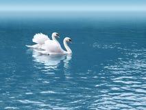 Cisne dois Imagem de Stock Royalty Free