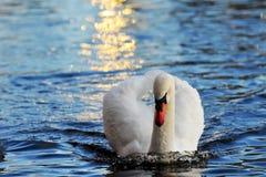 Cisne en el color del oro Fotos de archivo