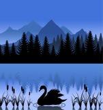 Cisne en el lago libre illustration