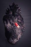Cisne negro Fotos de archivo libres de regalías