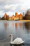 Cisne no fundo do castelo de Trakai Foto de Stock