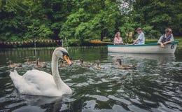 Cisne, patos y barco Fotografía de archivo libre de regalías