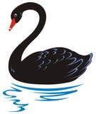 Cisne preta ilustração stock