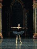 A cisne preta do cerimônia-bailado adulto O Lago das Cisnes do príncipe da rotação- imagem de stock
