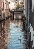 Cisne que nada no centro de Amsterdão fotografia de stock royalty free