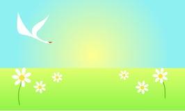 Cisne que vuela sobre el campo de flor Imagen de archivo