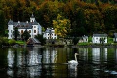 Cisne y castillo Hallstatt, Austria Imagen de archivo