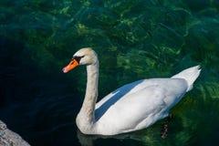 Cisne y embarcadero blancos Imagen de archivo libre de regalías