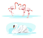 Cisne y flamenco Fotografía de archivo