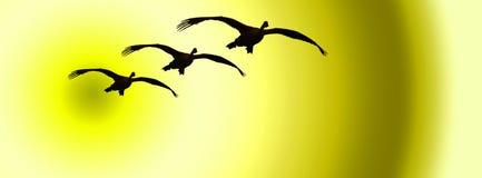 Cisnes 1 ilustração stock