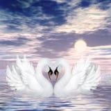 Cisnes ilustração do vetor