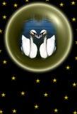 Cisnes Fotos de Stock Royalty Free