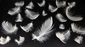 Cisnes abajo fotografía de archivo libre de regalías