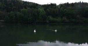 Cisnes Biaufond filme