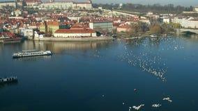 Cisnes blancos del río de Moldava y barco turístico distante Praga en un día soleado, República Checa tiro de la cacerola de la d almacen de metraje de vídeo