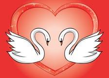 Cisnes blancos y corazón rojo - tarjeta Imágenes de archivo libres de regalías