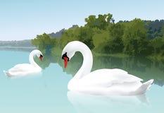 Cisnes bonitas ilustração stock