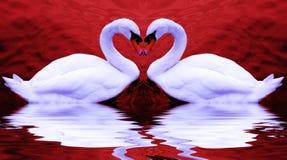 Cisnes de la tarjeta del día de San Valentín Fotografía de archivo libre de regalías