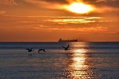 cisnes del vuelo durante salida del sol de oro sobre el mar Báltico en Gdynia, Polonia Fotografía de archivo
