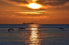 cisnes del vuelo durante salida del sol de oro sobre el mar Báltico en Gdynia, Polonia Fotos de archivo