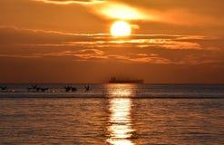 cisnes del vuelo durante salida del sol de oro sobre el mar Báltico en Gdynia, Polonia Foto de archivo