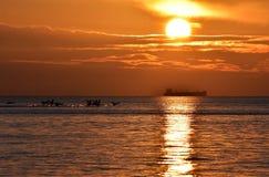 cisnes del vuelo durante salida del sol de oro sobre el mar Báltico en Gdynia, Polonia Imagen de archivo libre de regalías